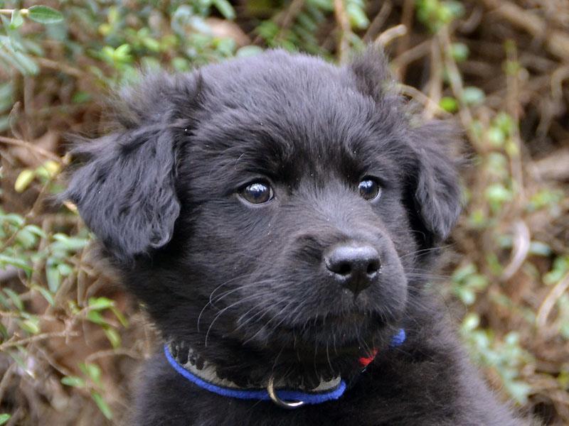 trainingtips puppies (2)